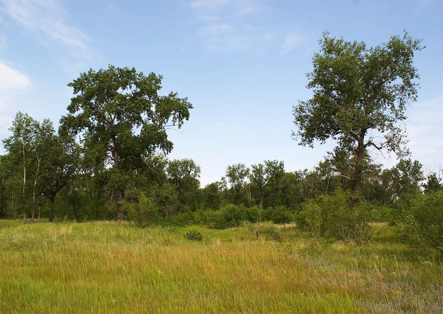 Лес на противополжном берегу Волги