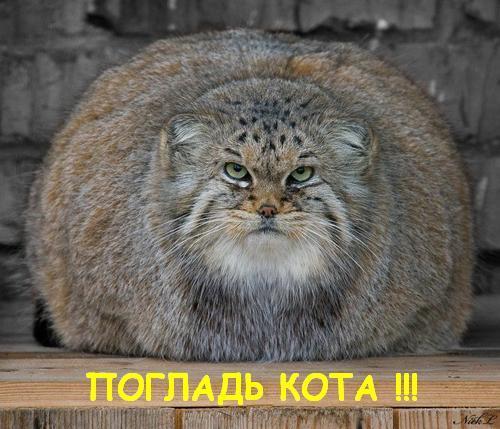 59.36 КБ