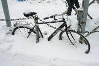 Велик в снегу
