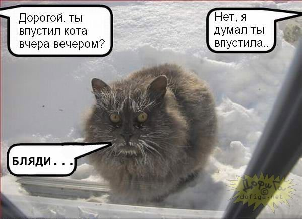 http://www.ljplus.ru/img4/j/o/joschkin_kot/x_abc539a1.jpg