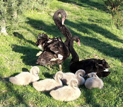Семейная идиллия
