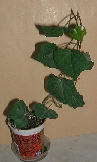Комнатные растения любящие тень фото