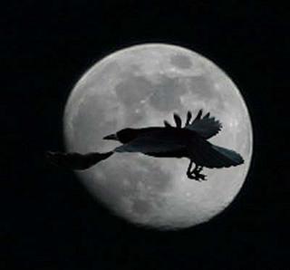 Образы Черного ворона в мифологии.