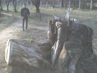 Мой старый парк