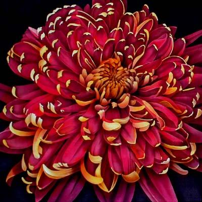 http://www.ljplus.ru/img4/l/a/lazutova/chrysanthemum.jpg