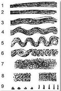 Виды и форма волос. Типы волос.