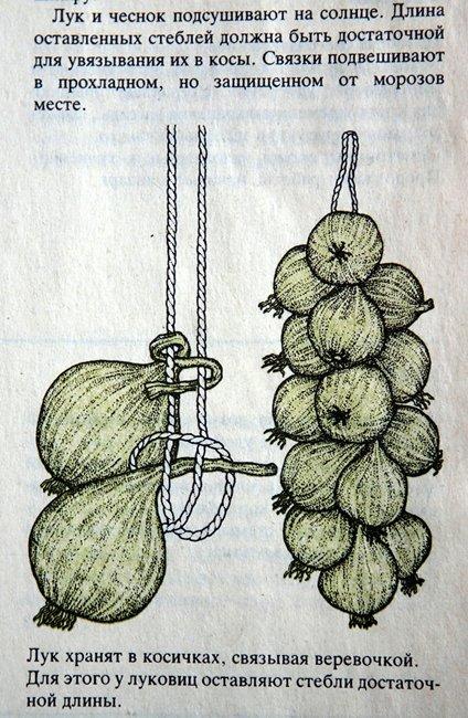 Как сделать лук с чесноком