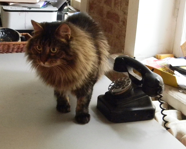 Что делать чтобы кот не убегал из дома