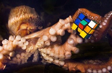 Кубик Рубика для осьминогов
