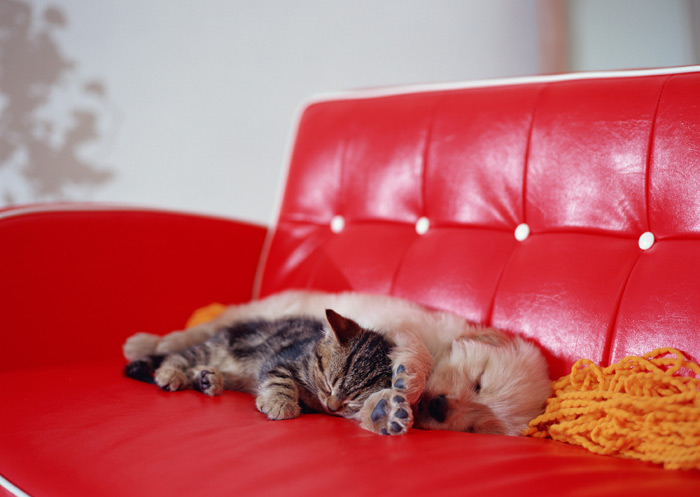 Картинки на рабочий стол кошки и собаки