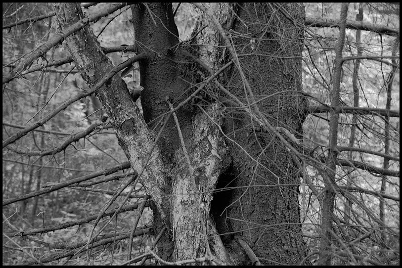 Лес дремучий рисунок