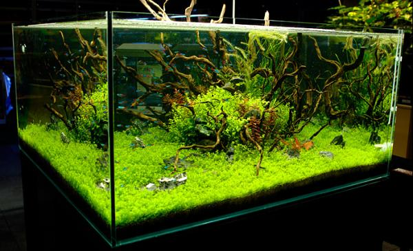Wabi kusa for Google fish tank mrdoob