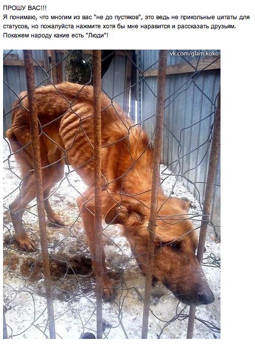 Идёт голосование за ужесточение наказания мучителям животных, присоединяйтесь!