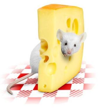 http://www.ljplus.ru/img4/n/o/notta_benna/mouse-cheese_1_.jpg