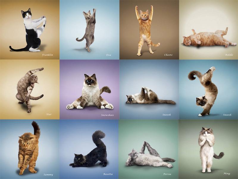 Картинки йога коты