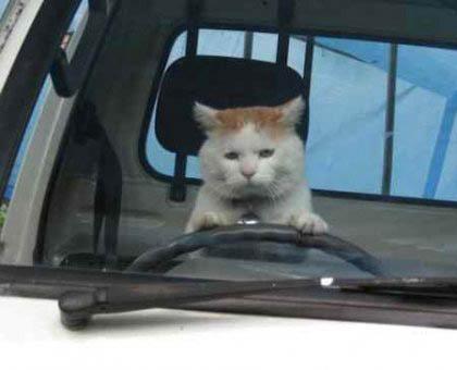 Внимание! Этому не научат в автошколе!