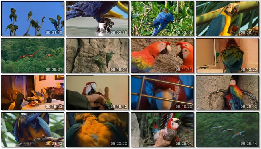 Wildlife on One   The Real Macaw (2000) [TVrip (xvid)] preview 1