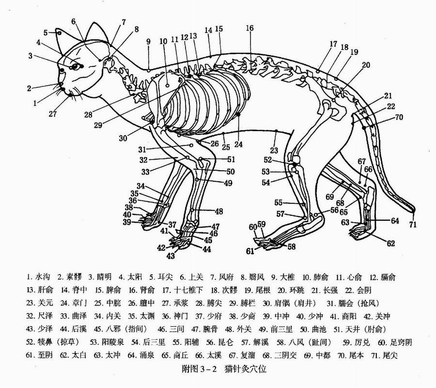 Акупунктура или иглоукалывание - старинный метод китайской медицины