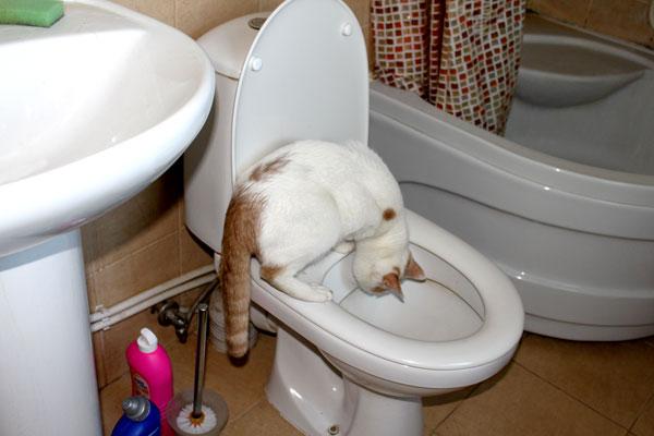 если котик ушел