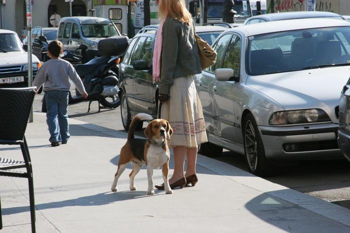http://www.ljplus.ru/img4/s/a/saenko/beagle.jpg