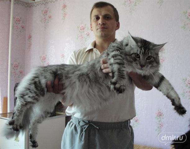 Класика жанру: кішки
