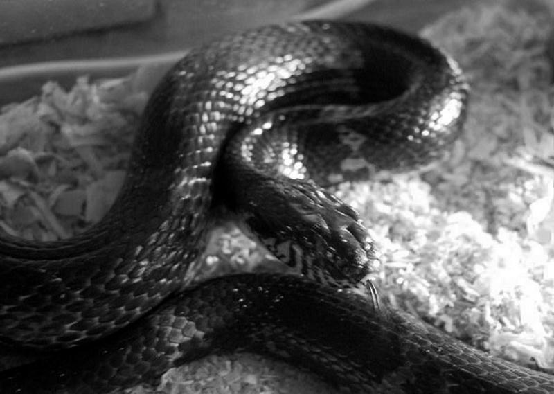 Если приснились змеи беременной женщине