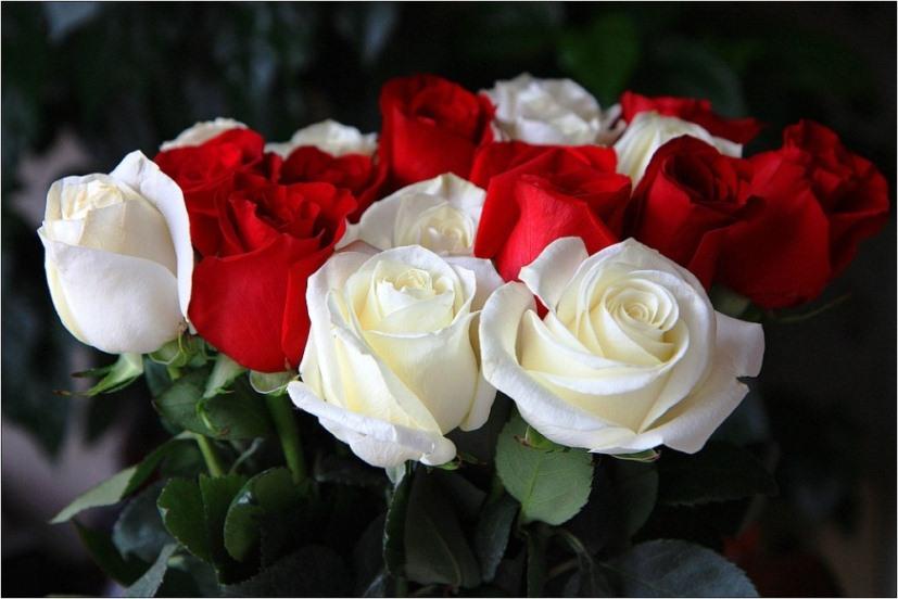 Ишимбайская ірина білик белие рози данной