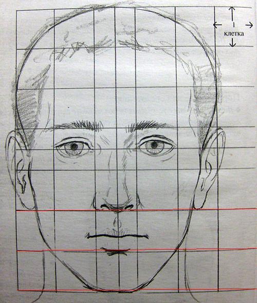 Рис. Схема лица анфас.