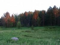Лес на острове Девичья Луда