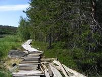 Мостки на участке инспекция-баня. Доски справа — следы деятельности юннатов, в будущем дрова для бани