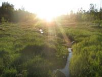Ручей по прозвищу Родник пробирается сквозь болота. Фото Руководителя