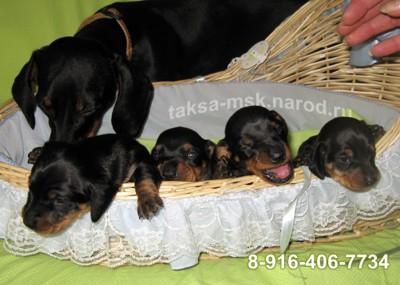 Ляля - заботливая мама с детишками