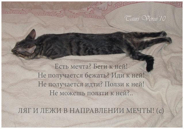 http://www.ljplus.ru/img4/t/a/tanuwka/me4ta.jpg