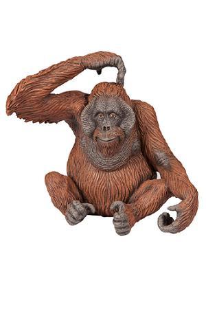 how to draw an orangutan