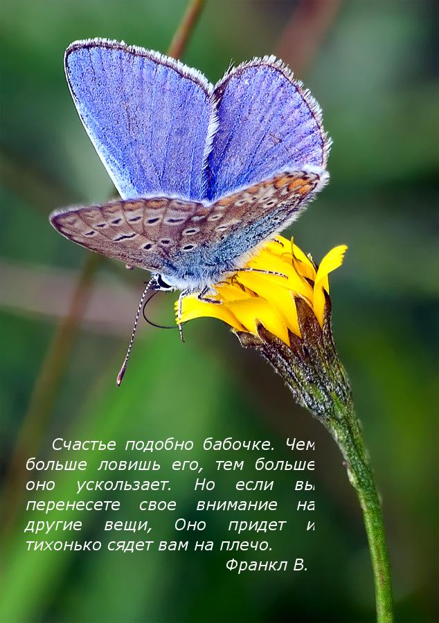 виктор франкл счастье подобно бабочке чем больше ловишь его