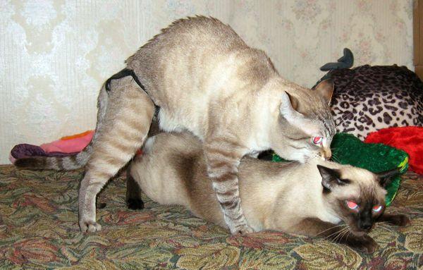 Кот вылизывает хвост слова