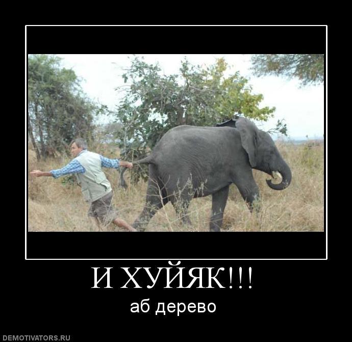 http://www.ljplus.ru/img4/u/t/utro_vecher/438372_i-hujyak.jpg