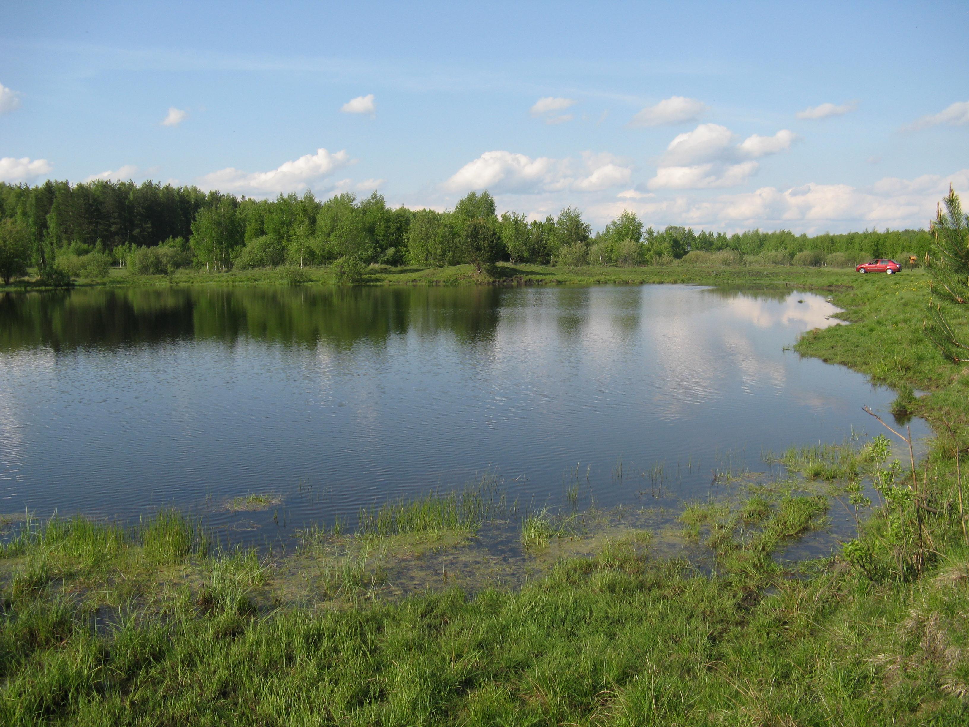 Лето  фото луга поля леса реки