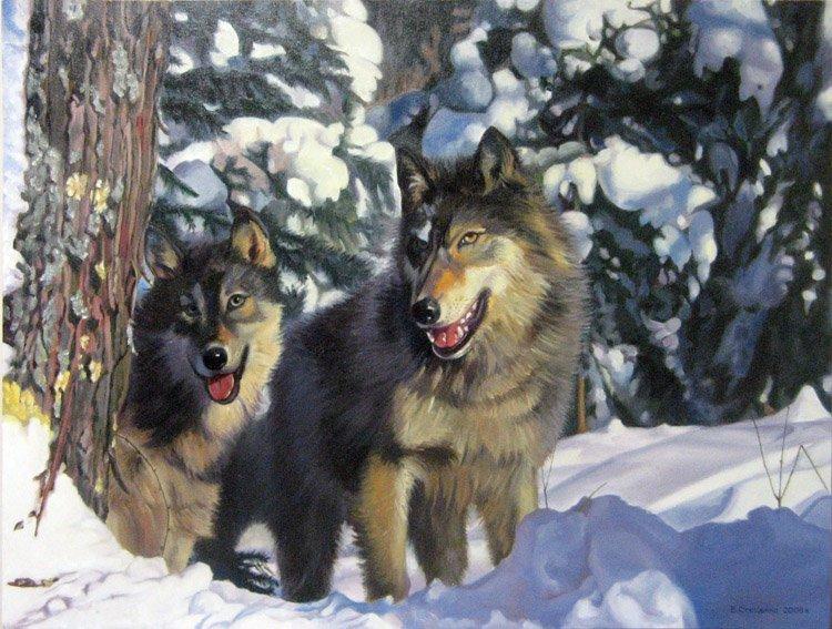 фото волков стай