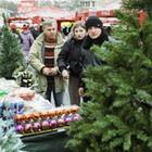 Экономика: Налоговая требует оформить разрешение для торговли елками