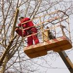 На улицах Житомира «Зеленбуд» кронирует деревья