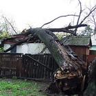 Происшествия: В Житомире ураганным ветром повалило деревья. ФОТО