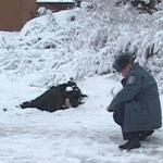 Происшествия: 22 человека погибли от переохлаждения в Житомирской области