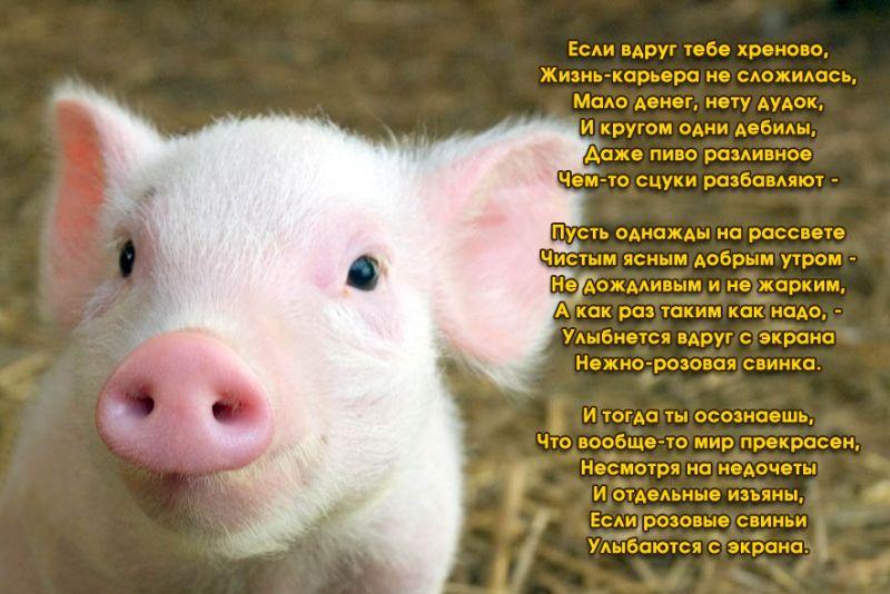 поздравления с днем рождения год свиньи самого моста, левее