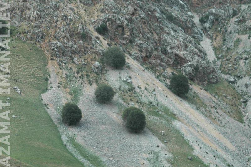 Вот такие кустарники по дороге на Сары-Челек
