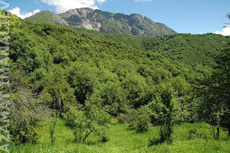 Ореховые леса. Еще не Сары-Челек, рядом