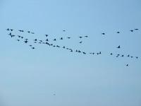 Птицы над Балтикой