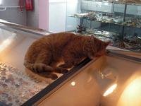 Кот среди ювелирных украшений