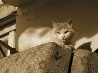 Кошка у подъезда