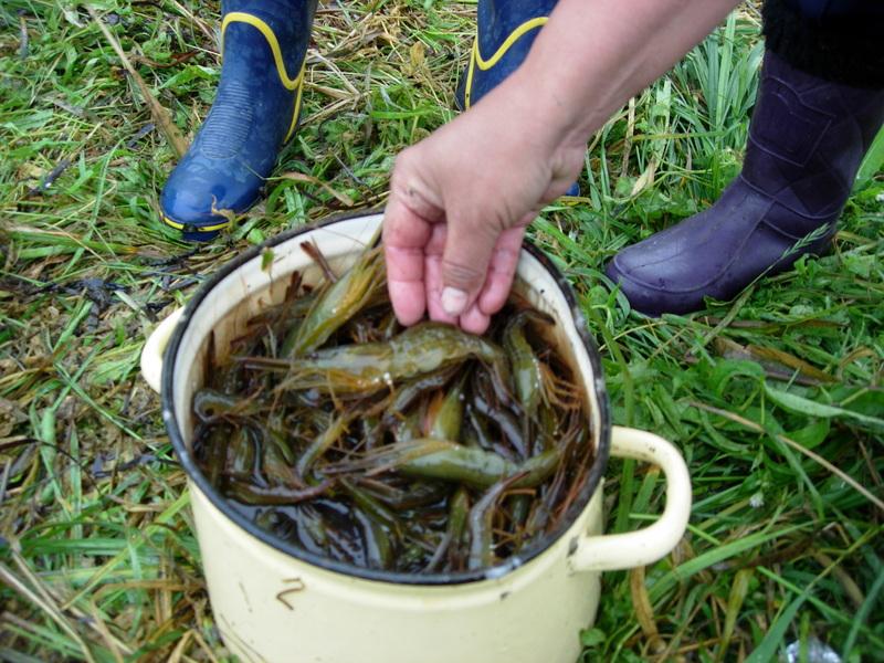 Ловля креветки в приморском крае